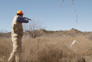 Texas Bird hunting in the hill country